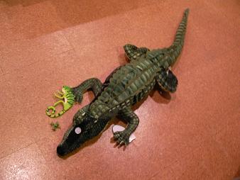 なぜ爬虫類ばかりなんだろう?